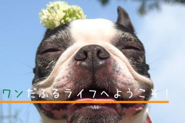 【サイトオープンご挨拶】当サイト(ワンだふるライフ)と保護犬キューピー
