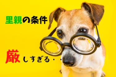 保護犬の里親になる条件が厳しい時はどうすればいい?