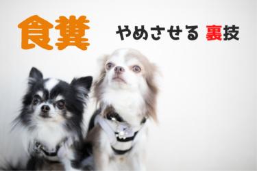犬の食糞をやめさせるための8つの方法と大切な心構え
