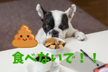 犬が食糞をする理由