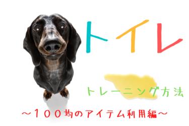 【 成犬のトイレのトレーニング 】100均にあるアイテムでトイレの囲いを作り覚えさせる方法