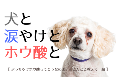 ホウ酸で犬の涙やけは消える?ホウ酸水の作り方と重曹水との徹底比較