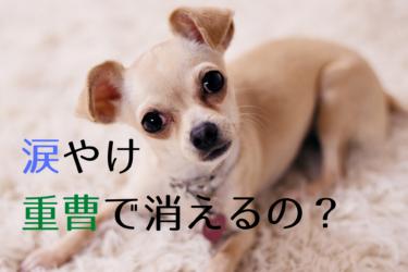 犬の涙やけ対策には重曹水が効く?ホウ酸水との違いも徹底解説します