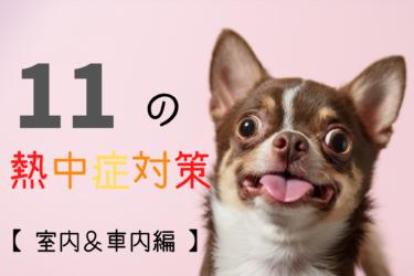 犬の熱中症対策 11選【 室内や車中の予防編 】