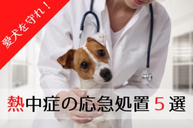 【 犬の熱中症 】予防と応急処置|大切な命を必ず守る5つの方法