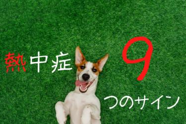 犬の熱中症の症状を知り予防するための9つのポイント