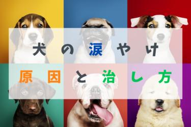 【 犬の涙やけ 】原因と治すための8つの方法