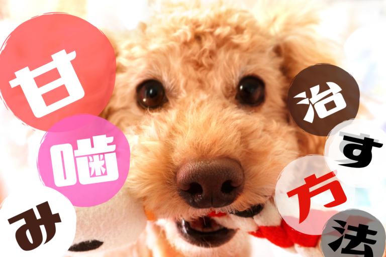 子犬の甘噛み噛み癖いつまで、しつけして治す方法