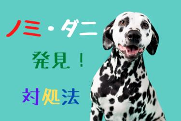 犬にノミ・ダニが寄生した時の症状や見つけ方・取り方
