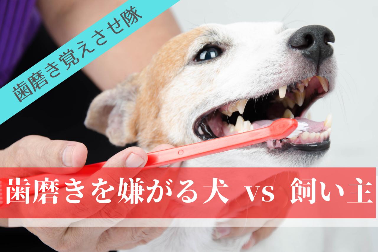 歯磨きを嫌がる犬の歯磨きの仕方