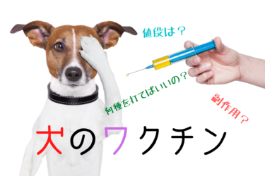 犬のワクチン|子犬のスケジュール、混合ワクチン種類表や値段をご紹介