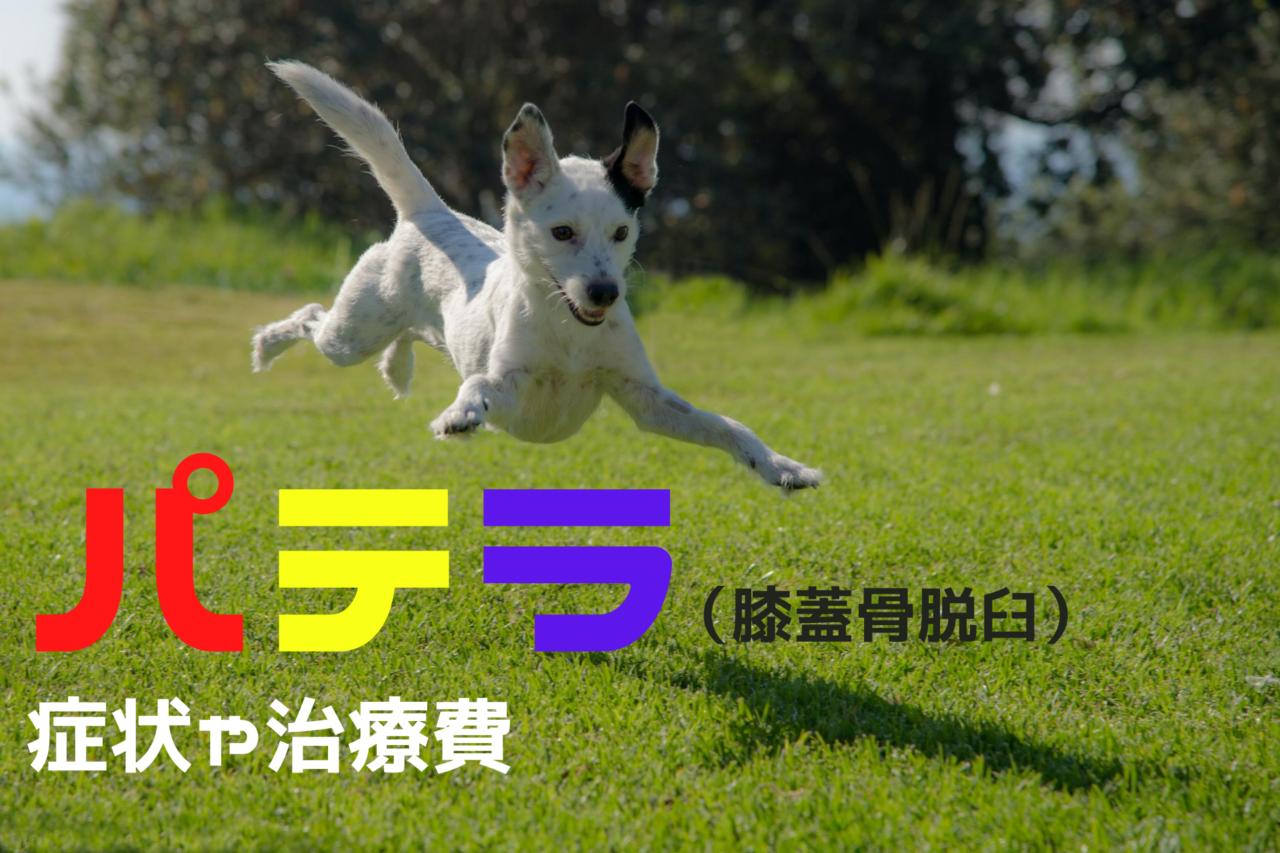 犬のパテラ、膝蓋骨脱臼の症状、治療費用、犬種