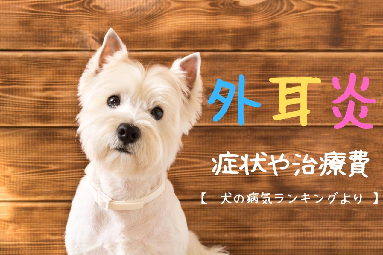 外耳炎の症状や治療費、犬種、病気の原因、予防