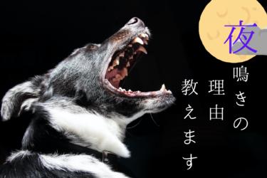 老犬に多い夜鳴き|夜鳴きが始まる理由と対策