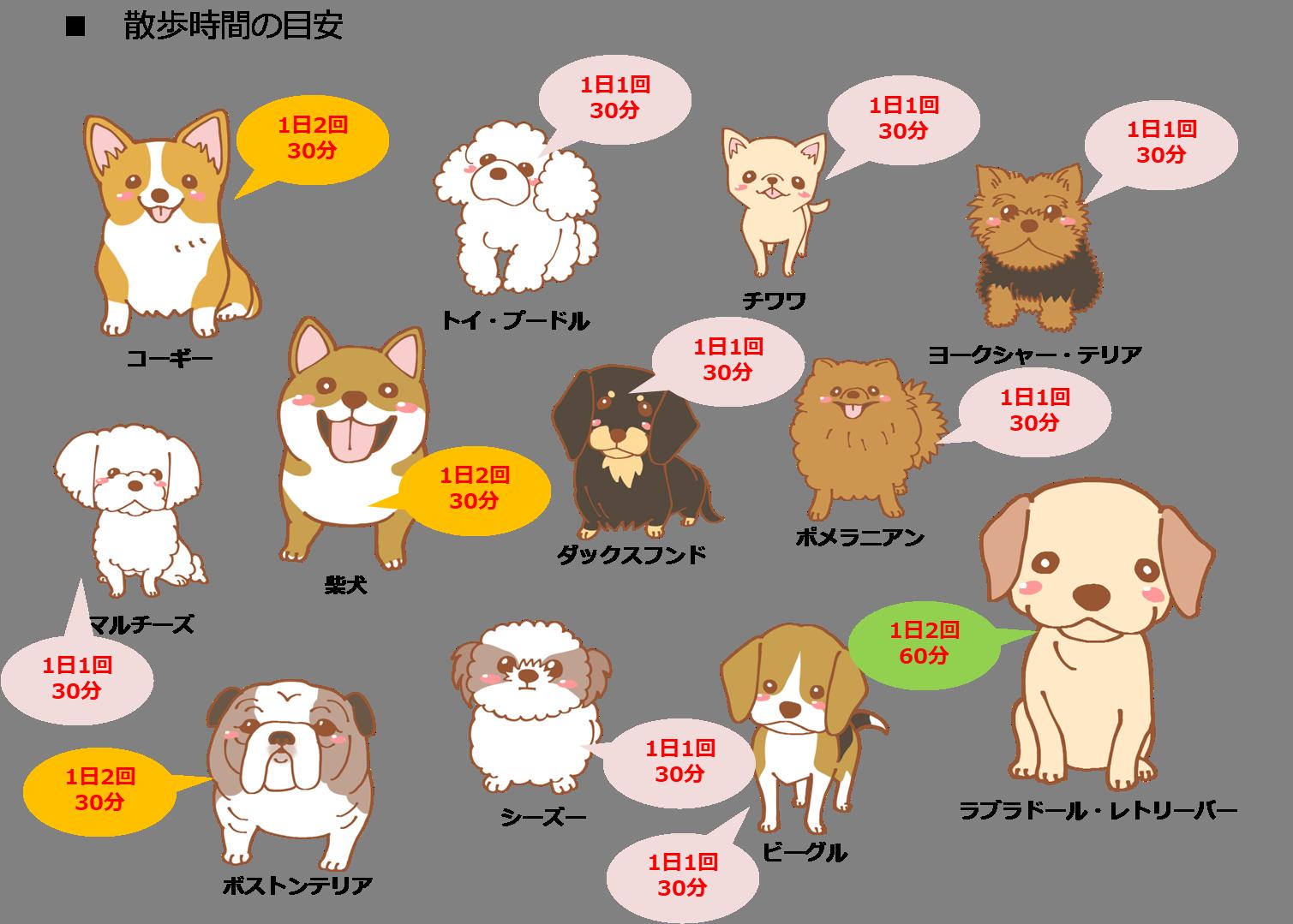 犬の散歩時間の目安(犬種別)
