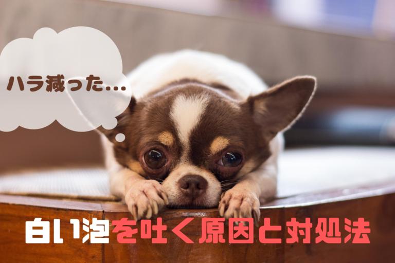 犬が吐く白い泡・黄色い液体・緑色の液体の原因と対処法