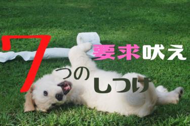 犬の要求吠えはいつまで続く|7つの根本的なしつけ方法