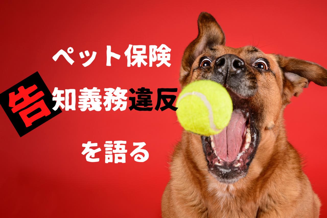 ペット保険の告知義務違反、バレる、バレない、老犬、シニア犬、高齢犬