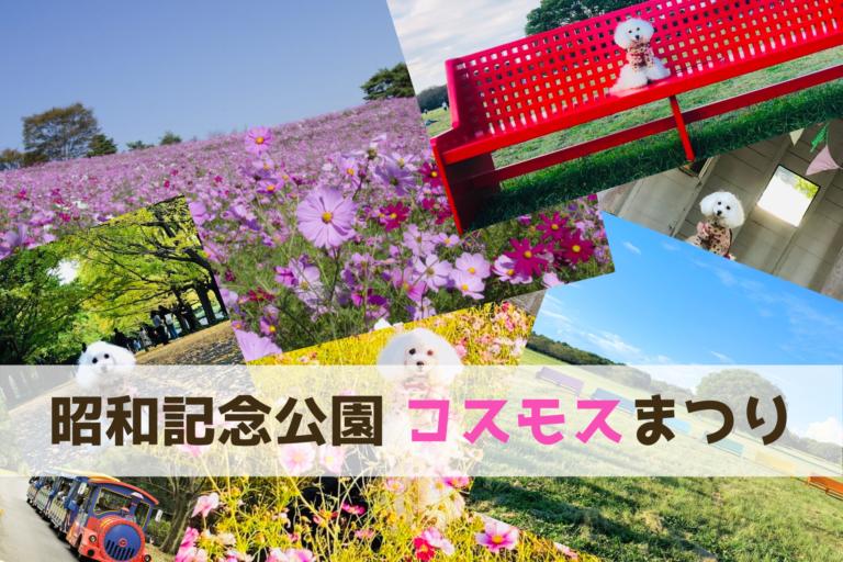 国営昭和記念公園、東京都立川市、ペット同伴可能、ドッグラン、コスモスまつり2020