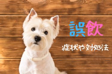 犬がプラスチックを誤飲した時の症状と対処法|うんちで出ないこともある