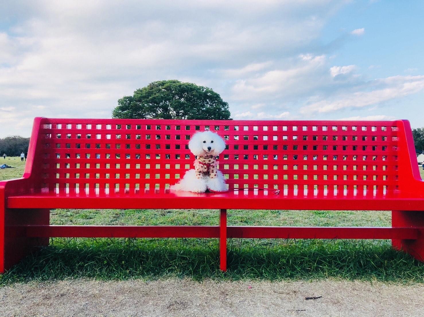 昭和記念公園なないろベンチ
