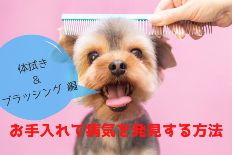 犬の病気早期発見、お手入れ、触る、体拭き、ブラッシング、健康状態チェック