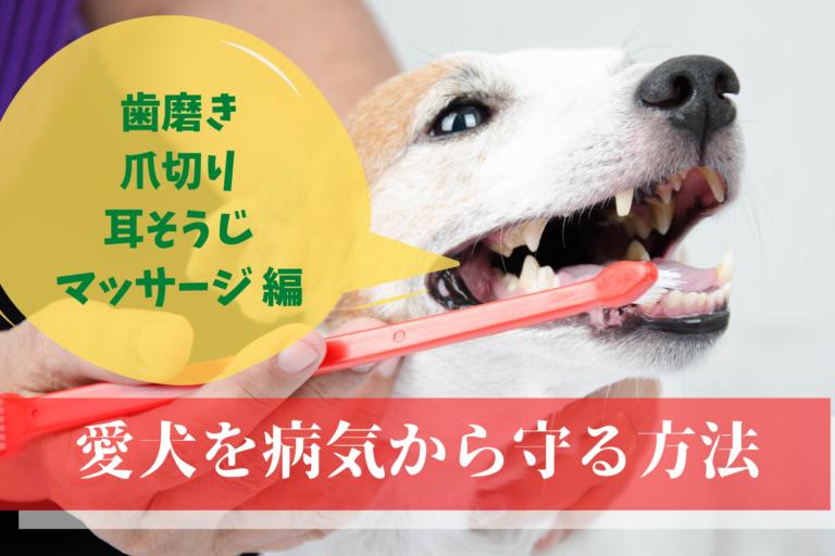 愛犬健康状態のチェック、健康診断、マッサージ、歯磨き、耳そうじ、爪切り病気の早期発見
