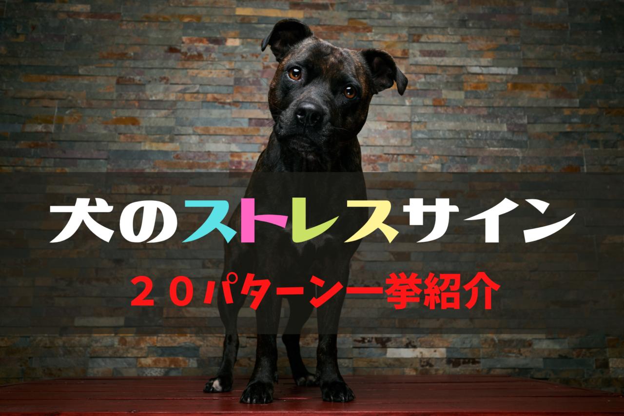 犬のストレスサイン、しぐさ、行動、カーミングシグナル