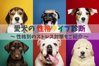 愛犬の性格タイプ別診断、ストレスタイプ、ストレスケア、ストレス解消方法