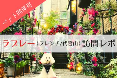 【 ペット同伴可能 】フレンチレストラン ラブレー(代官山/恵比寿)の魅力を語ります