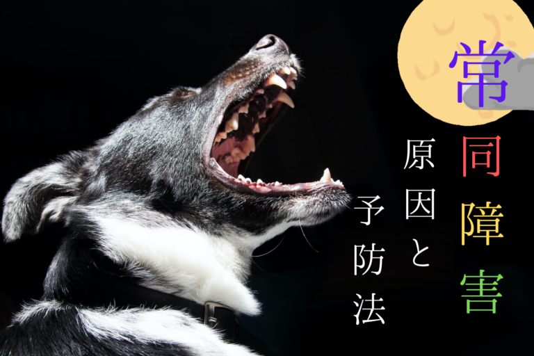 犬の常同障害(強迫性障害)常同行動、症状、原因、治療法、治療費、うつ病、鬱病、ストレス