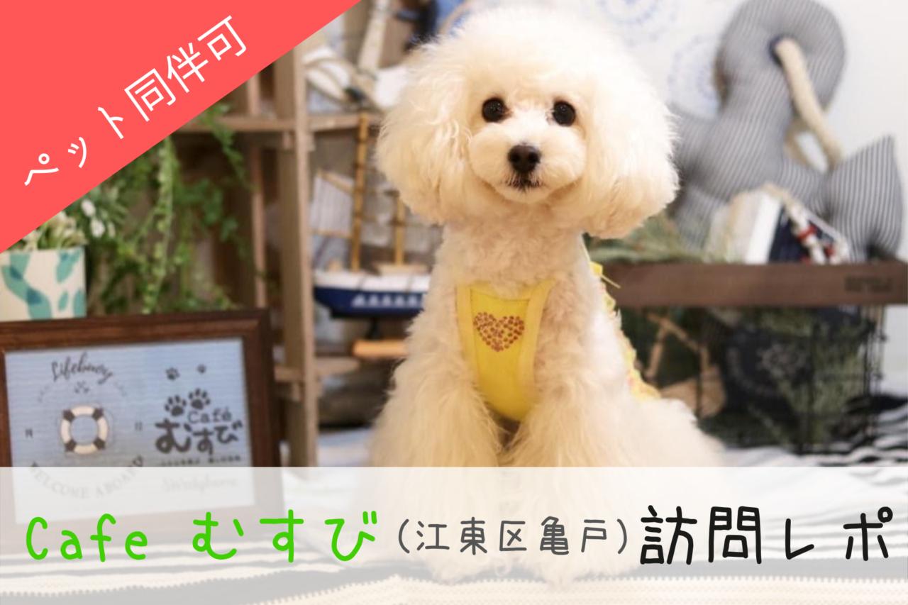 カフェ むすび、カフェ 結び、江東区亀戸、亀戸水神駅、ドッグカフェ、東京、東東京、江東区ドッグカフェ、ペット同伴可能、ドッグカフェ、犬連れ、犬同伴可能、ペットOK