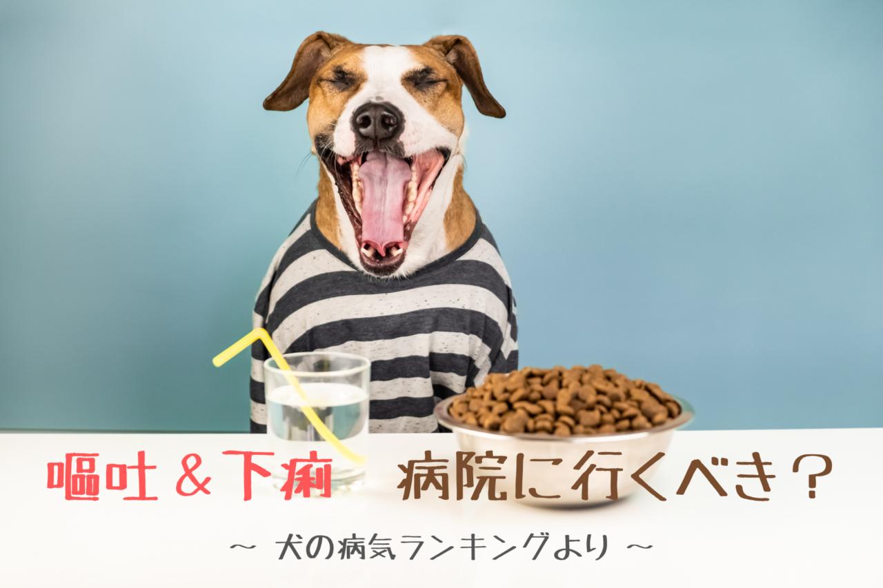 犬の嘔吐、下痢、対処法、治療方法、症状、原因、犬の病気ランキング