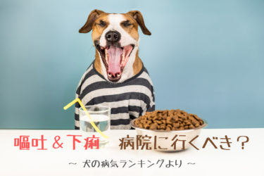 【 愛犬の嘔吐や下痢 】動物病院に連れて行くタイミングと判断基準|犬の病気ランキング