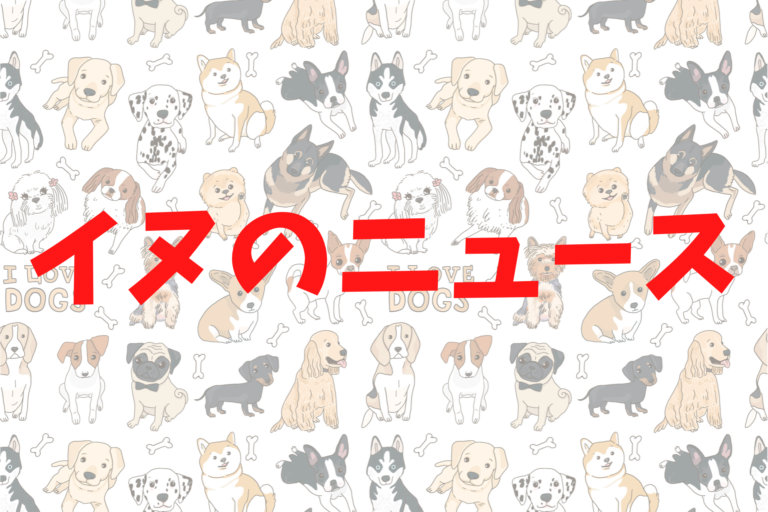 犬のニュース