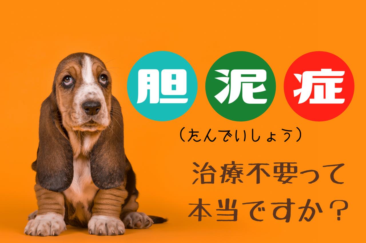 犬の胆泥症、症状、原因、手作りフード、手作りごはん、サプリメント、治療費、
