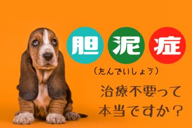 犬の胆泥症とは|治療の必要性や関連する病気についても解説します