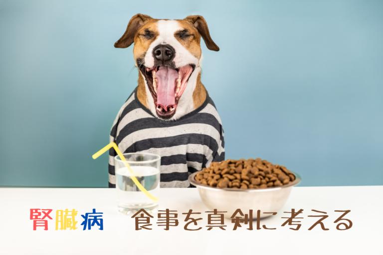 犬の慢性腎不全(腎臓病)、食べ物食材、食べていい、いけない、サプリメント