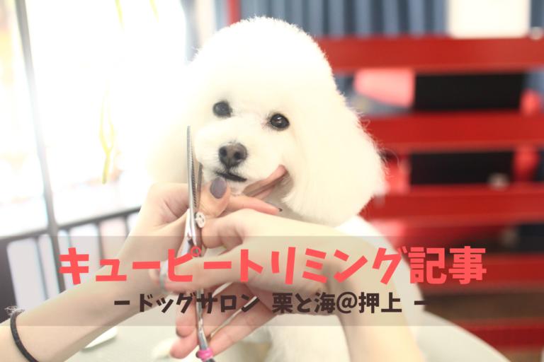 保護犬キューピー トリミング、墨田区、押上、錦糸町、江東区、トリミングサロン、オススメ、人気、犬
