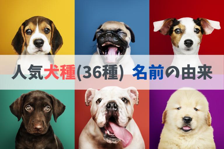 人気犬種の名前の由来: