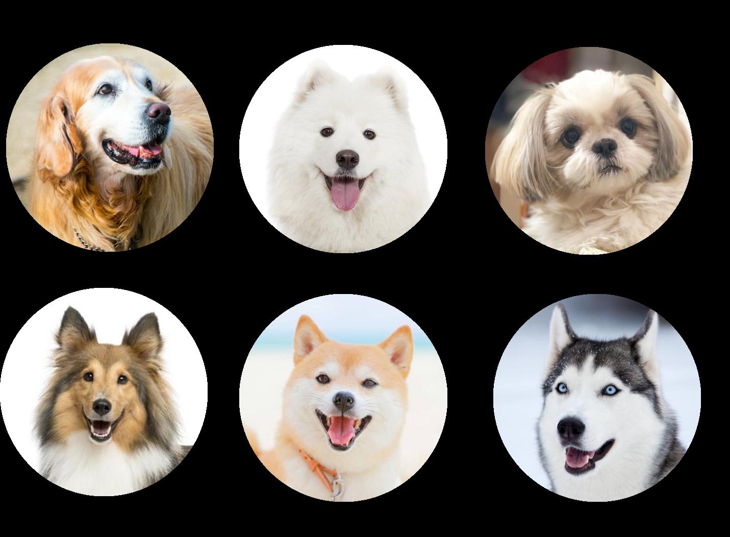 人気犬種の名前の由来42種