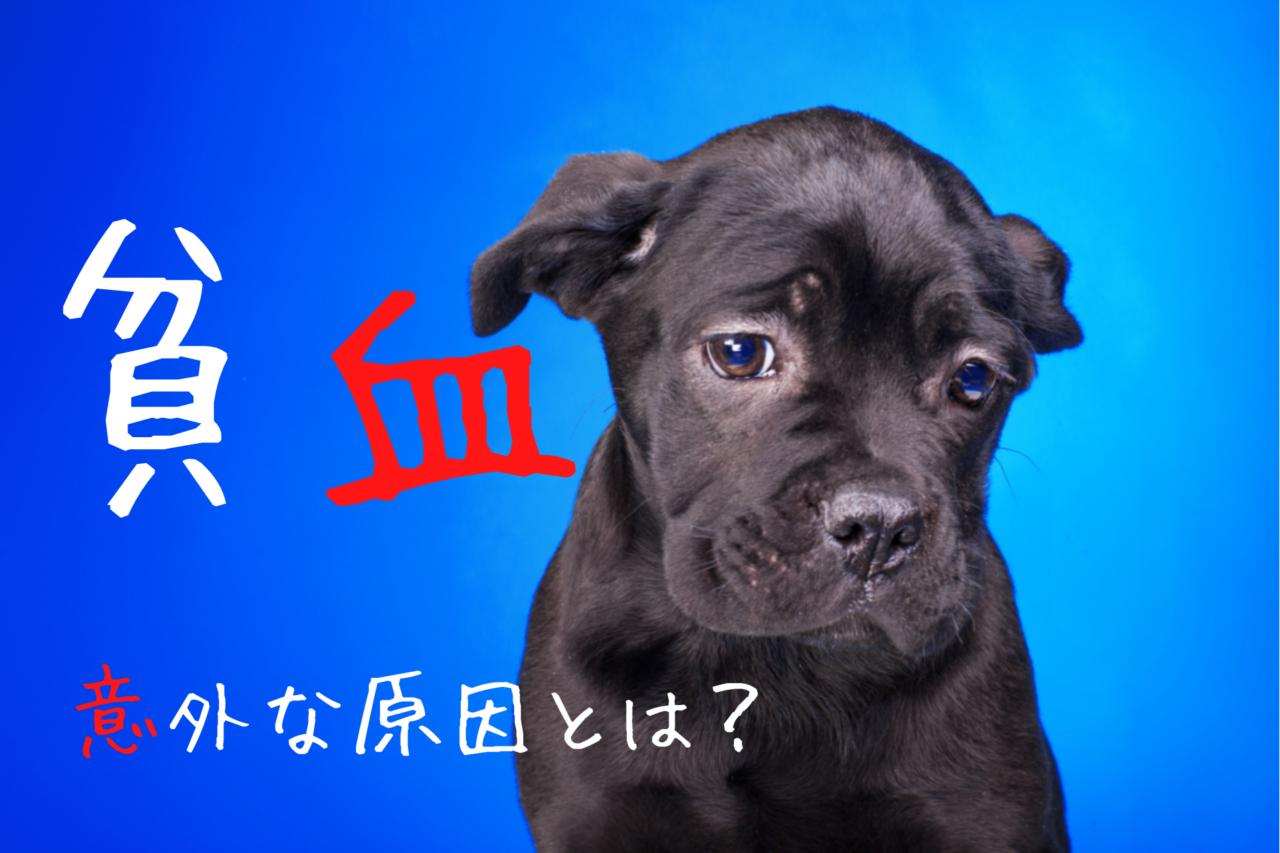 犬の貧血、原因、症状、鉄分、食事、食材