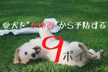 """愛犬を """"かゆい"""" から防ぐ予防法9選"""