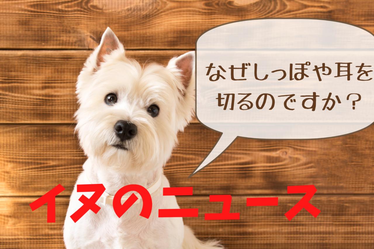 犬のしっぽや耳を切る、断耳、断尾、ドッキング