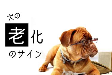 犬の『老化サイン』を知っておこう