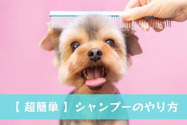 【 超簡単 】愛犬のシャンプーのやり方と頻度をご紹介