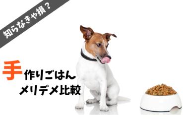 【 手作り派?ドッグフード派? 】 愛犬の手作りご飯 メリットとデメリットを紹介