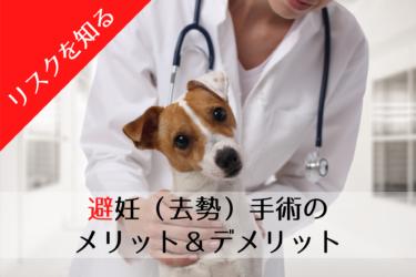 犬の避妊手術、去勢手術、メリット、デメリット、手術後の後悔、痛み、時期、費用、
